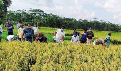 farmer-krishi